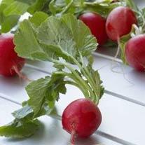 Vegetable Guide