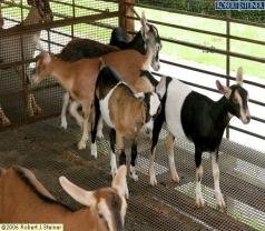 Hay Dairies Pte Ltd Photos