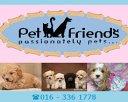 Pet Friends Photos