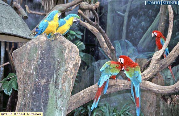 Jurong Bird Park, 5 Parrots