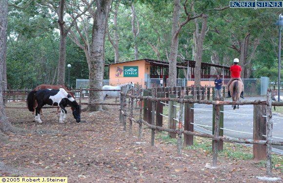 Pasir Ris Park, Gallop Stables