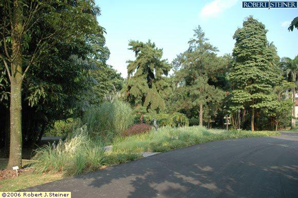 Singapore Botanic Gardens -  Dell Lane