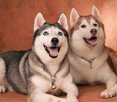 Best Friends Doggy & Kitty Salon Cum Learning Centre Photos