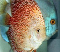 Singa Aquarium Photos
