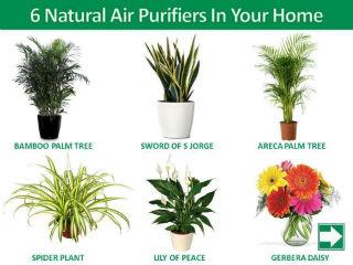 Plant Nursery S