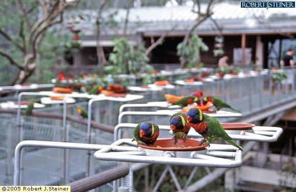 Jurong Bird Park, Parrots